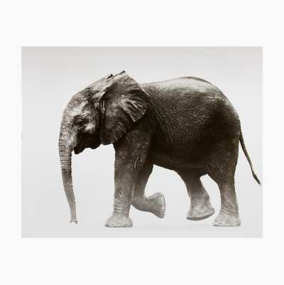 POSTERS 40X50CM ELEPHANT