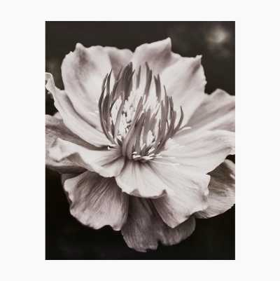 POSTERS 40X50CM FLOWER
