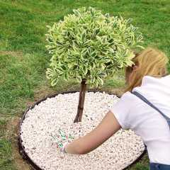 Flowerbed Edging